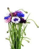 Bouquet of cornflowers in a porcelain vase. Royalty Free Stock Photos