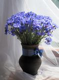 Bouquet of cornflowers. In a rustic vase stock photography