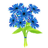 Bouquet of cornflowers. Spring flower Royalty Free Stock Image