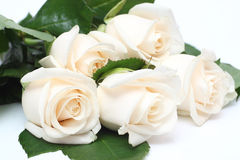 Bouquet of cream roses Royalty Free Stock Image