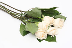 Bouquet of cream roses Stock Photos