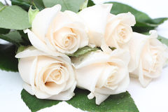 Bouquet of cream roses. With drops of water Stock Photography