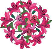 Bouquet with crimson and pink lily. Bouquet from crimson and pink lily in colorful graphic style Stock Photography