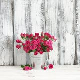 Bouquet of crimson roses in bucket. Bouquet of crimson spray roses in galvanized bucket on white wooden table against shabby wall Royalty Free Stock Images