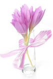 Bouquet of crocus Stock Images
