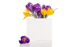 Bouquet from crocus flowers in vase with empty card for text Royalty Free Stock Image
