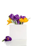 Bouquet from crocus flowers in vase with empty card for text Royalty Free Stock Photos