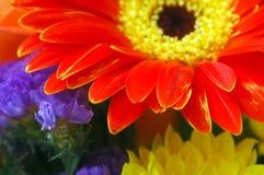 Bouquet d'été Image stock