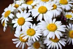 Bouquet d'été des pétales blanc marguerites et du milieu jaune photographie stock libre de droits