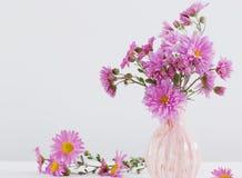 Bouquet d'amellus d'aster dans le vase en céramique Photos libres de droits