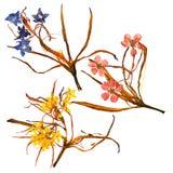 Bouquet d'application des pétales bizarres secs de lis et du mult pressé image stock