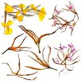 Bouquet d'application des pétales bizarres secs de lis et du mult pressé photographie stock libre de droits
