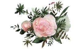 Bouquet d'aquarelle de pivoines Image stock