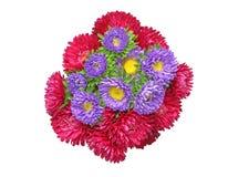 Bouquet d'aster Photographie stock