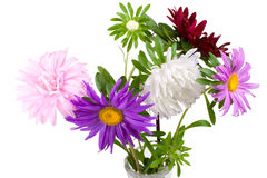Bouquet d'asters Photo libre de droits