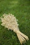 Bouquet d'avoine sur l'herbe verte Image libre de droits