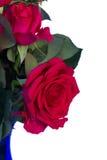 Bouquet d'haut étroit de roses roses foncées Photographie stock libre de droits
