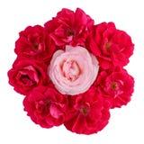 Bouquet d'un rose et beaucoup de roses rouges d'isolement sur le blanc Photos libres de droits