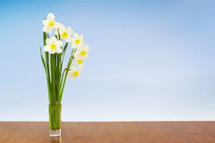 Bouquet of daffodils against blue sky Stock Images