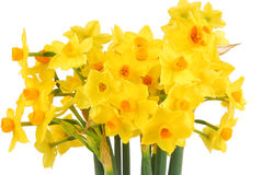 Bouquet of daffodils flower Royalty Free Stock Images