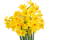 Bouquet of daffodils flower Royalty Free Stock Image