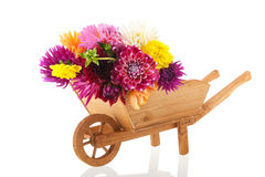 Bouquet Dahlias in wheel barrow Stock Image