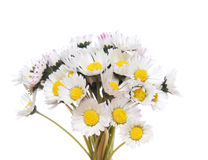 Bouquet of daisies Stock Images