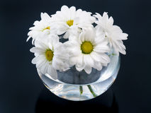Bouquet of daisies Royalty Free Stock Photos