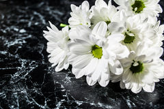 Bouquet of daisies Stock Photography