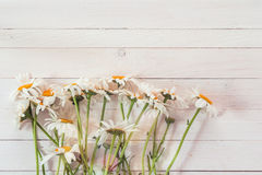 Bouquet of daisies on a background of white painted wooden plank Stock Image