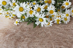Bouquet of Daisies. On bagging background Royalty Free Stock Photography