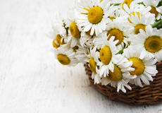 Bouquet of daisies in a basket Stock Images