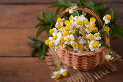 Bouquet of daisies in a basket. Royalty Free Stock Photography