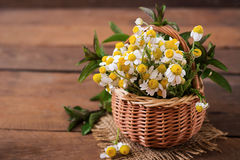 Bouquet of daisies in a basket Royalty Free Stock Photography