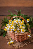 Bouquet of daisies in a basket Stock Photo