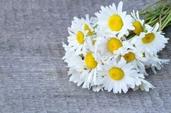 Bouquet of daisies Royalty Free Stock Photo