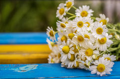 Bouquet of daisies on the bench Stock Photography