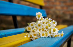 Bouquet of daisies on the bench, background Stock Images