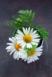 Bouquet of daisies in a bucket Stock Photo