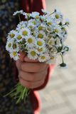 bouquet of daisies Stock Photos
