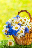 Bouquet of daisies and cornflowers Royalty Free Stock Photos