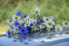 Bouquet of daisies and cornflowers stock photos