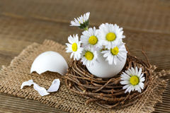 Bouquet of daisies in an eggshell. Stock Photo