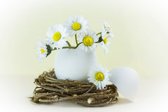 Bouquet of daisies in an eggshell. Royalty Free Stock Image