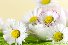 Bouquet of daisies in an eggshell. Stock Photography