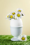 Bouquet of daisies in an eggshell. Royalty Free Stock Photography