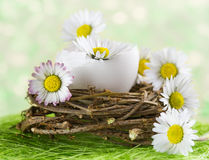Bouquet of daisies in an eggshell. Royalty Free Stock Photos