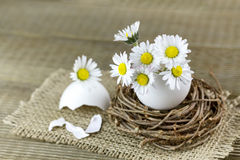 Bouquet of daisies in an eggshell. Stock Photos