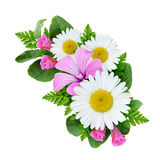 Bouquet with daisies and field bindweed flowers. Isolated on white Stock Photos