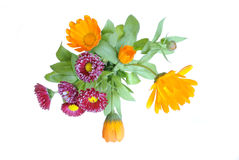 A bouquet of daisies and flowers of calendula Stock Images